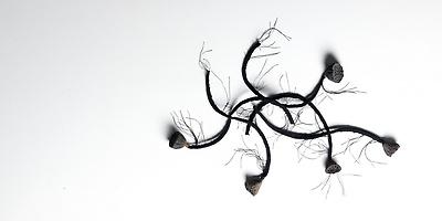 http://pacea.fr/Director/albums/album-83/lg/MothersDay_InstallationSculpture_ViewFromAbove_AlexandraLoewe__Copier_.jpg